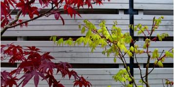 Lasur Cedria Pacífico. Dale a tu madera un tono vintage. Lasur Rojo, Verde, Gris